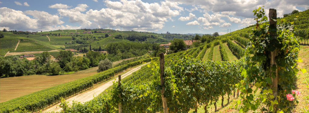 piedmont-langhe-hills-vineyards